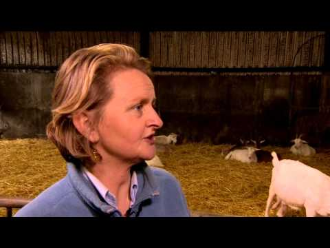 St Tola Irish Goat Cheese featured on RTE's Big Week on the Farm
