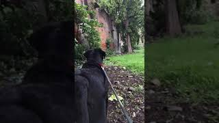 Dog is watching ghost