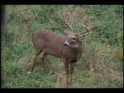 North American Hunting Club: