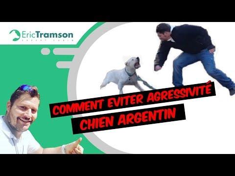 COMMENT EVITER AGRESSIVITÉ CHIENNE DOG ARGENTIN (1)