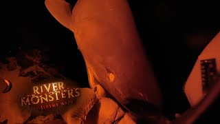 A Feasting 6-Gill Shark - River Monsters