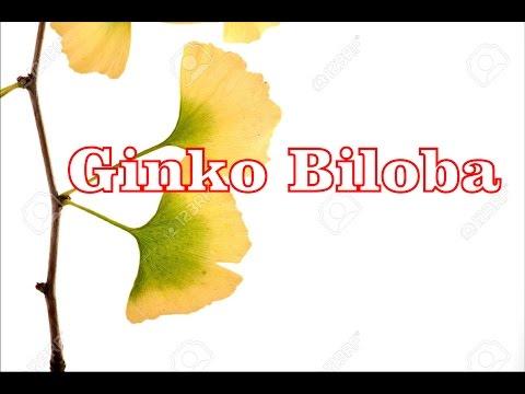 Ginko Biloba: proprietà e benefici