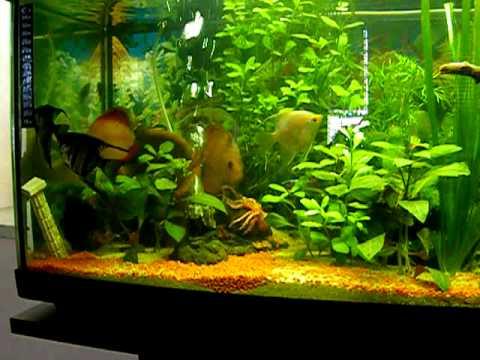 Il mio acquario d 39 acqua dolce youtube for Acqua acquario