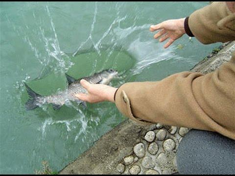 Chú Cá Luôn Bơi Về Nơi Cũ Sau Khi Được Phóng Sanh