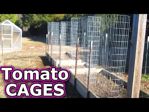 Tomato CAGES make from Fencing $65 5'x50' prevent blight how to build trellis support stakes