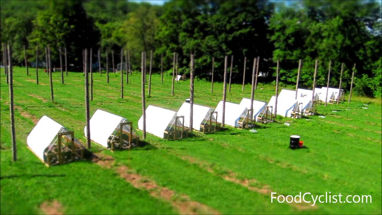 2015 Pastured Broiler Budget — Farm Marketing Solutions