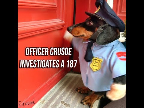 Officer Crusoe Dachshund on Duty: Investigates 187