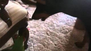 Doberman Pinscher Plays With Military Macaw
