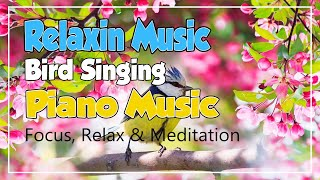 Relaxing Music with Birds Singing - Beautiful Piano Music by Naiko Meditation Relax Music