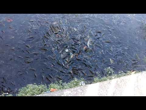 Fish pond in mirik west bengal india youtube for Koi pond india