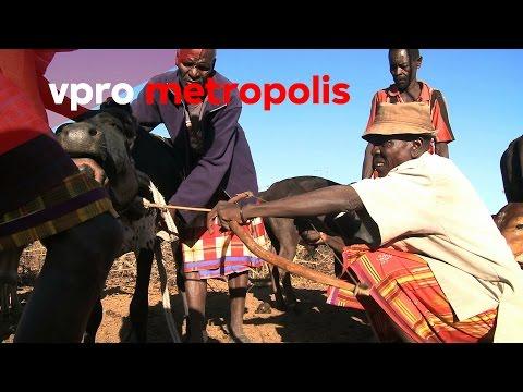 Cow blood as superfood in Kenya - vpro Metropolis