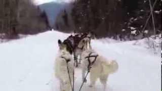Muddy Paw Dog Sled