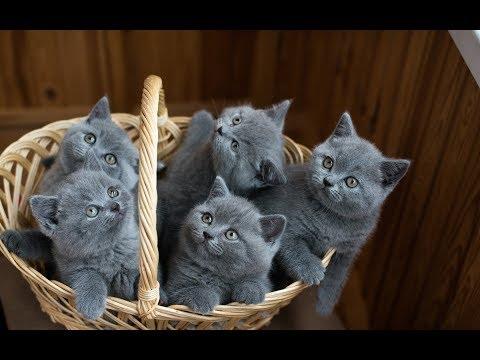 Личный опыт лечения котов и котят от лишая