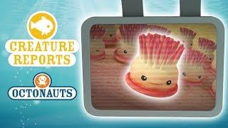 Octonauts - Creature Reports | Very Tiny Creatures!