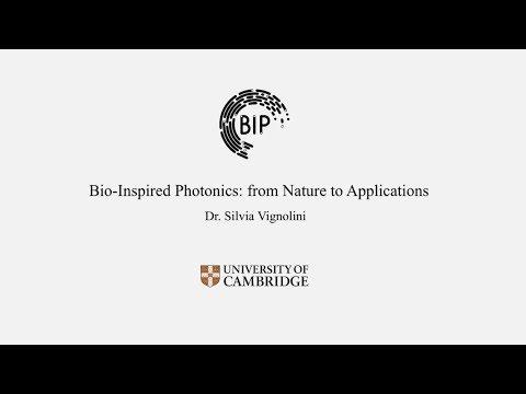 BP-ICAM Webinar Series 2017: Bio-Inspired Photonics