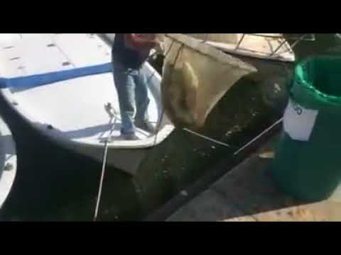 Fiumicino - Quintali di pesci morti in darsena
