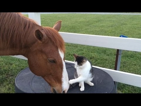 The horse and cat who have a heart warming bond best friends and spend nearly all their free time to