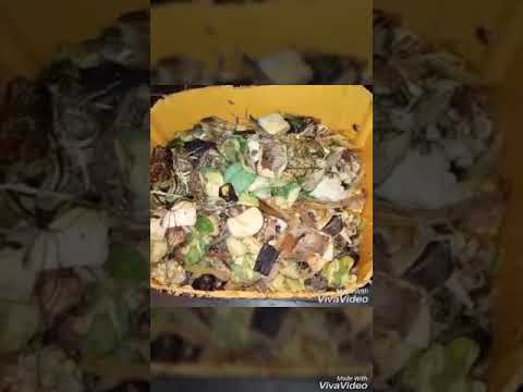 ANIMAL FEED; making use of kitchen wastes and food leftovers