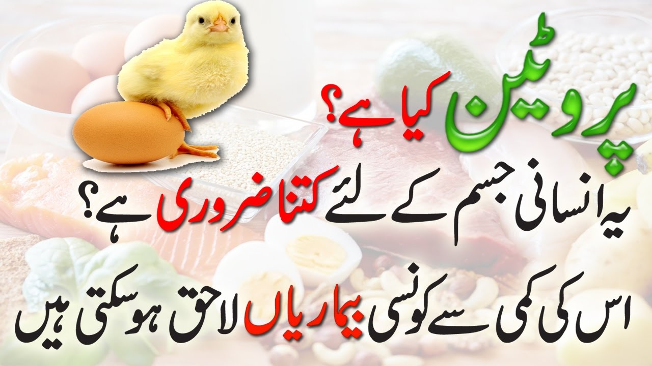 Protein Kya Hai In Urdu Hindi Daily Protein Requirements Why We Need Youtube