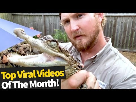 Top 50 Viral Videos Of The Month – April 2020