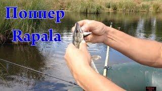 Ловля щуки летом на спиннинг*** //Spin fishing for pike// (мой видео отчет)(Ловля щуки спинингом на поппер Rapala.Ловля щуки весной на мелководии.Ловля щуки весной на спиннинг видео.(мой..., 2015-06-05T09:38:19.000Z)