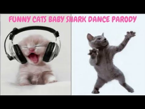 Funny Cats Dancing Baby Shark (Parody Version)