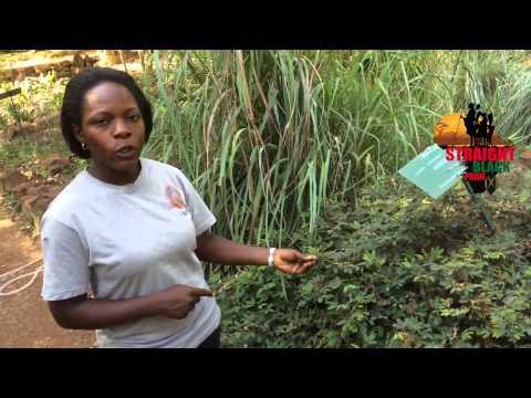 SBPM 2015: Herbs, Natural Medicine & Healing in Uganda