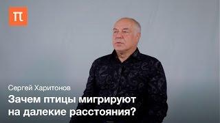 Миграция птиц Сергей Харитонов