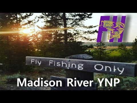 Yellowstone Hoppers: Part 2 (Fly Fishing the Madison)