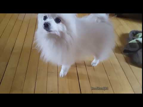 Dog Sound Effect #2