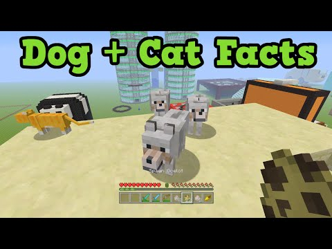 minecraft-5-things-you-didn't-know-about-cats-&-dogs