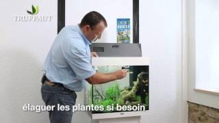 Comment bien entretenir un aquarium ? - Jardinerie Truffaut TV