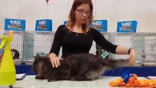 Кот мейн кун Драгон 8 месяцев