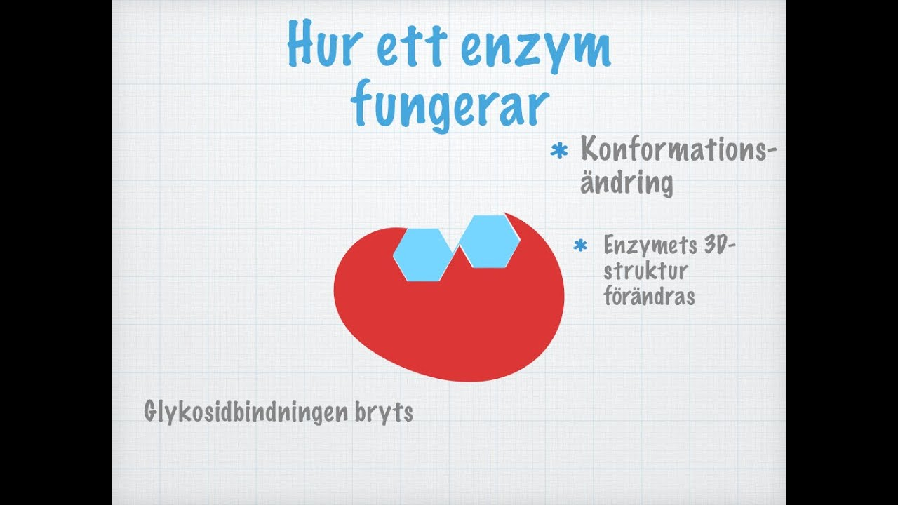 enzymer påverkar kemiska reaktioner i kroppen