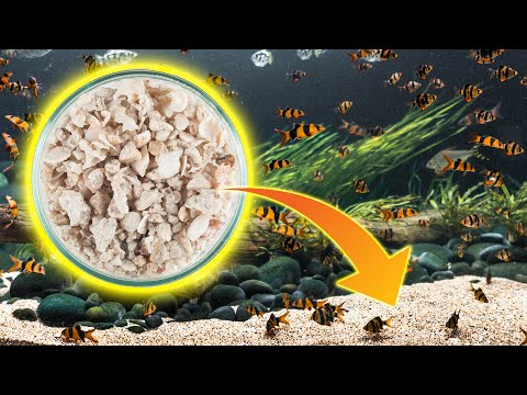 How To Safely Raise Aquarium PH With Crushed Coral​