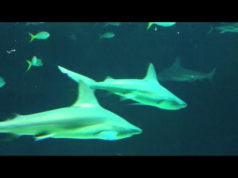 Sharks, Stingrays and Fish at Henry Doorly Zoo