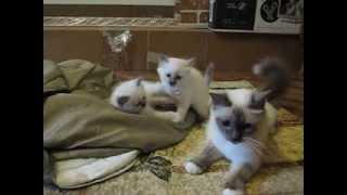 Кошачье царство, 5я неделя
