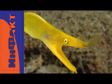 Морские животные, о которых вы не знали