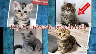 Top Ten  Cat  Breeds Price in  India
