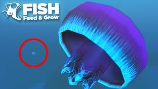 THE GIANT JELLYFISH!!! - Fish Feed Grow
