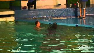 Купание с Дельфинами..