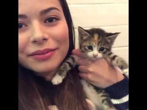 CHAT LIVE Di Miranda Cosgrove Insieme A Dei Teneri Gattini!