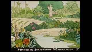 Возникновение жизни на Земле.  Диафильм 1985