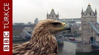 Şah Kartalı Darchan'ın gözünden kuş bakışı Londra - BBC TÜRKÇE