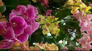 Singapore flower show displays latest garden designs