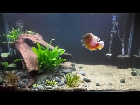 Planted Oscar Tank (see Description For Details)