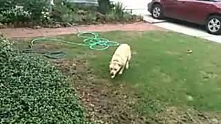 Cleo The Training Dog