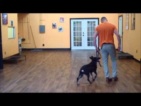 San Antonio Dog Training Co