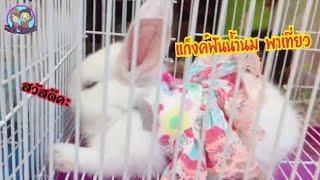 กระต่ายน้อย หนูแฮมเตอร์ แก็งค์ฟันน้ำนมพาเที่ยว |  น้องใยไหม kids Snook