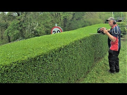 How To Trim A Hedge, Level